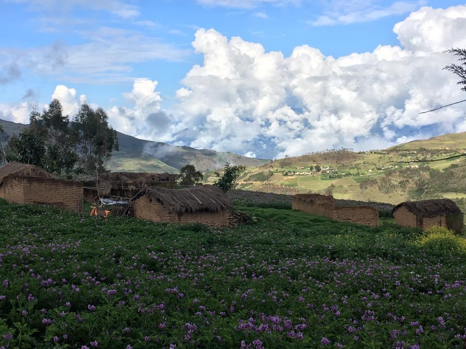 utsikt med berg och blommande potatis